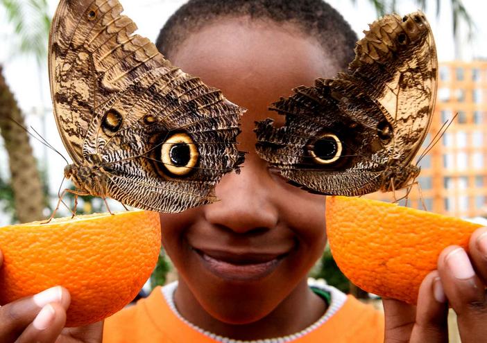 Exposition papillons Muséum Histoire Naturelle Londres
