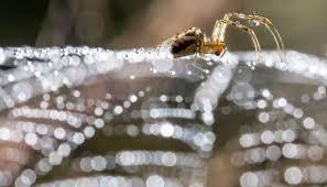 araignée tissant sa toile