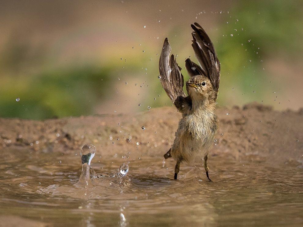 petit oiseau sous la pluie