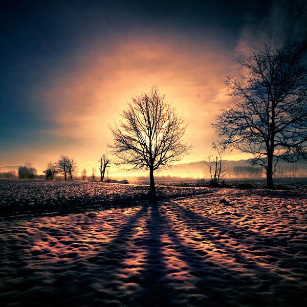 ombre-arbre