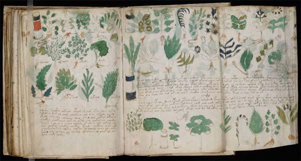 manuscrit Voynich 3