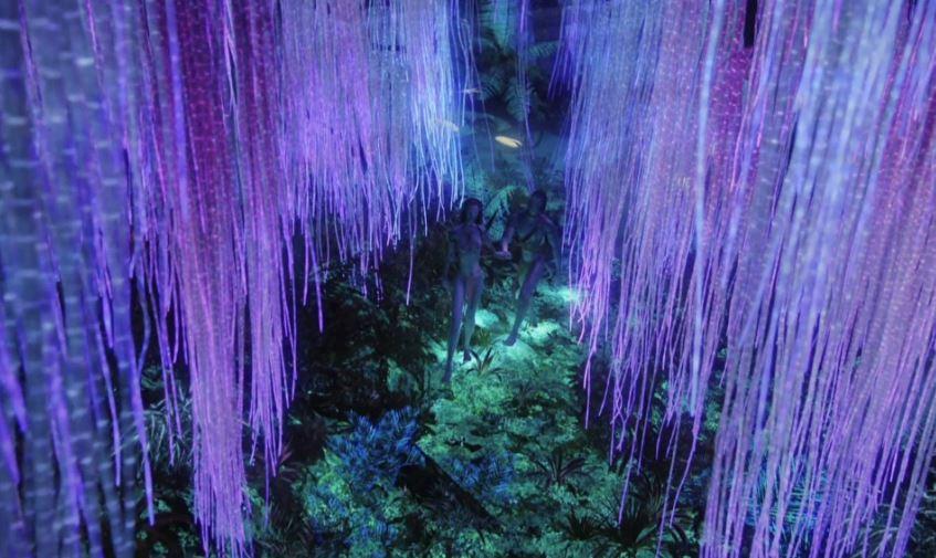 communication des arbres dans Avatar.JPG