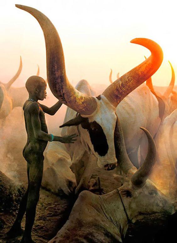 enfant et vaches Soudan Afrique.jpg