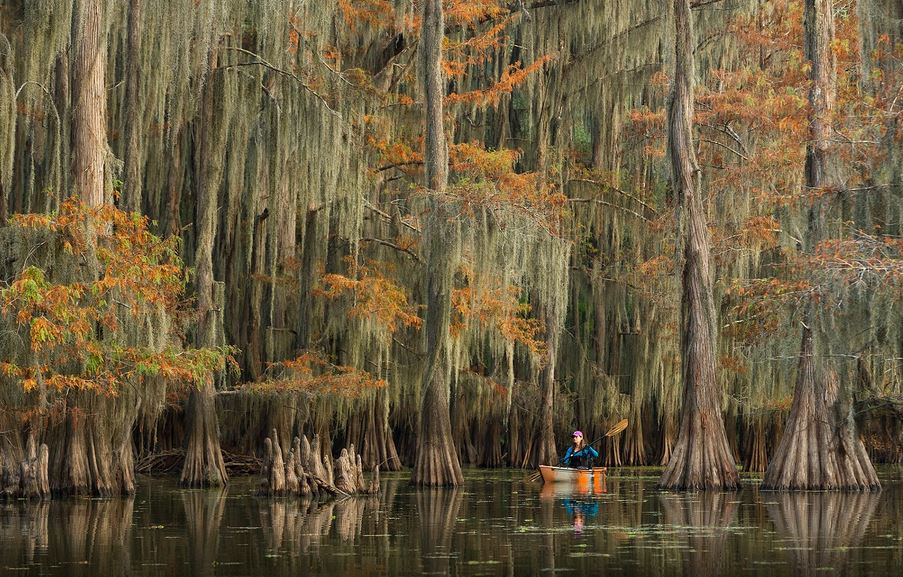 canoe dans les marais en Louisiane USA