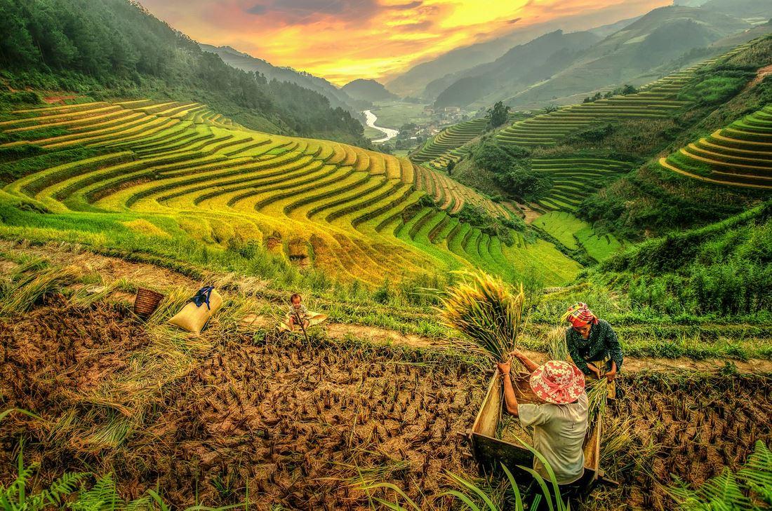 famille travaillant dans les rizieres Yenbai Vietnam