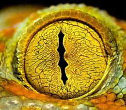oeil de python (2)