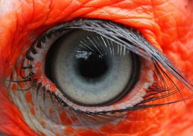 oeil flamant rose2