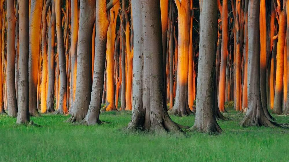 foret Nienhagen appele aussi le bois des Fantomes Allemagne
