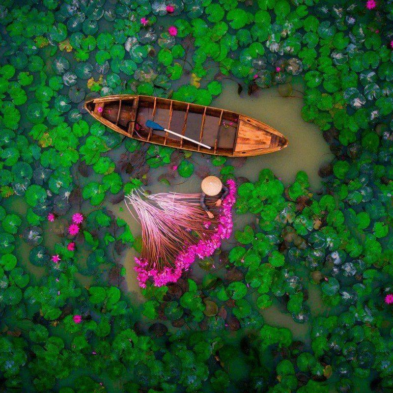 Lac de fleur de lotus au Vietnam.JPG