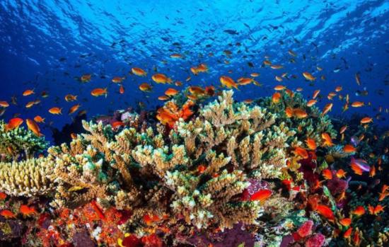 coraux barrière de corail Australie.PNG