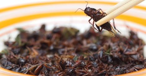élevage insectes2.PNG