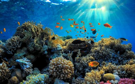 grande barrière de corail 3.PNG