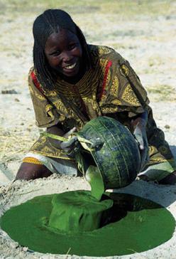 Culture de la spiruline au Tchad