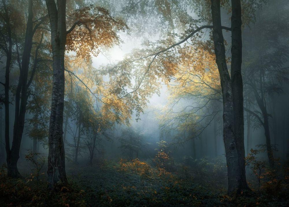 Veselin-Atanasov-début d'automne foret des balkans Bulgarie