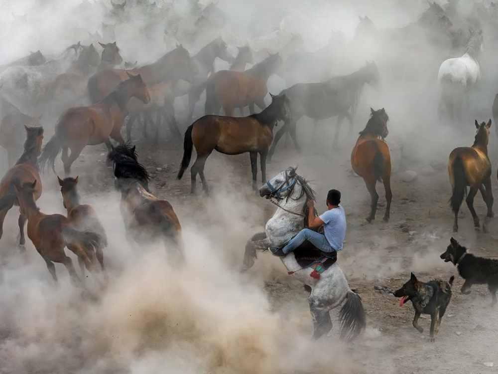 Cérémonie de domestication des chevaux sauvages Yilki, dans le village de Hörmetci Turquie ©F Dilek Uyar