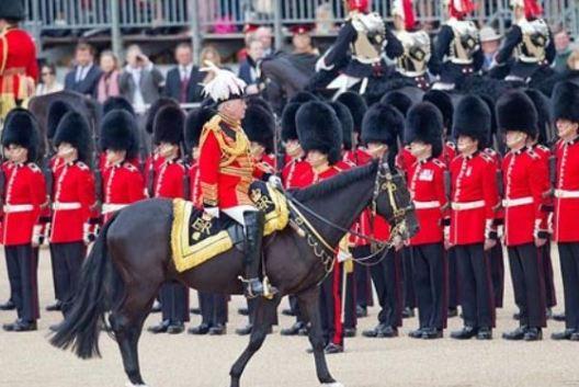 reine chevaux 2