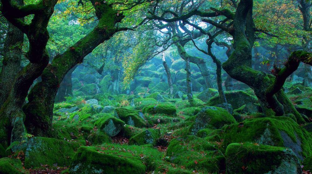 forêt Yakushima Japon nscrite au Patrimoine mondial de l'Unesco, montagnes vertigineuses, à plus de 1 800 mètres d'altitude, et d'une épaisse forêt de cèdres millénaires, tapissée de mousse et de fougères