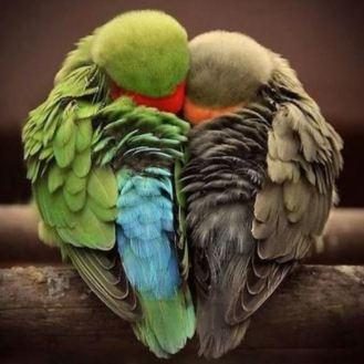 perroquets dormant