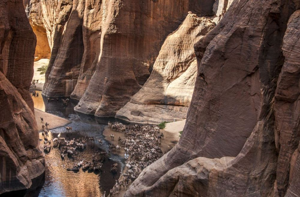 Guelta d'Archei Tchad désert d'Ennedi caravane de chameaux at Vincent Bournazel