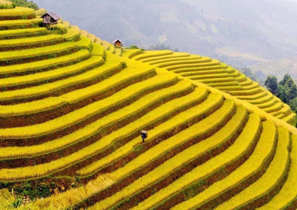 rizières Anapurna2
