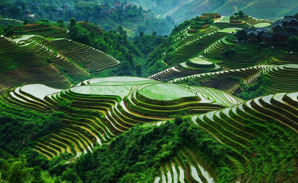 rizières Longshen Chine