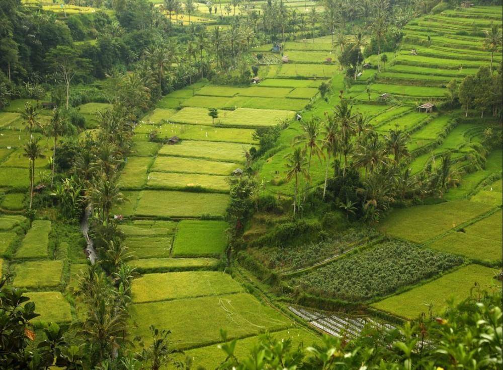 rizières Malaisie