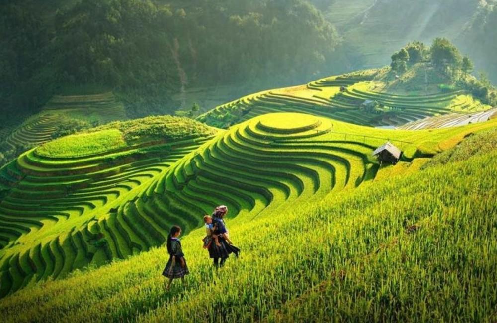 rizières SAPA Vietnam2