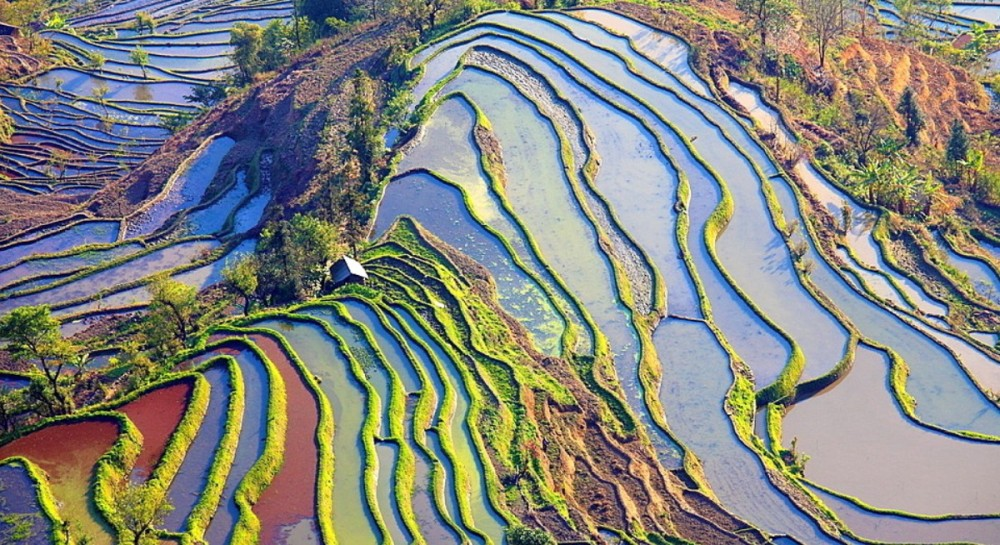 rizières Yuanyan Chine