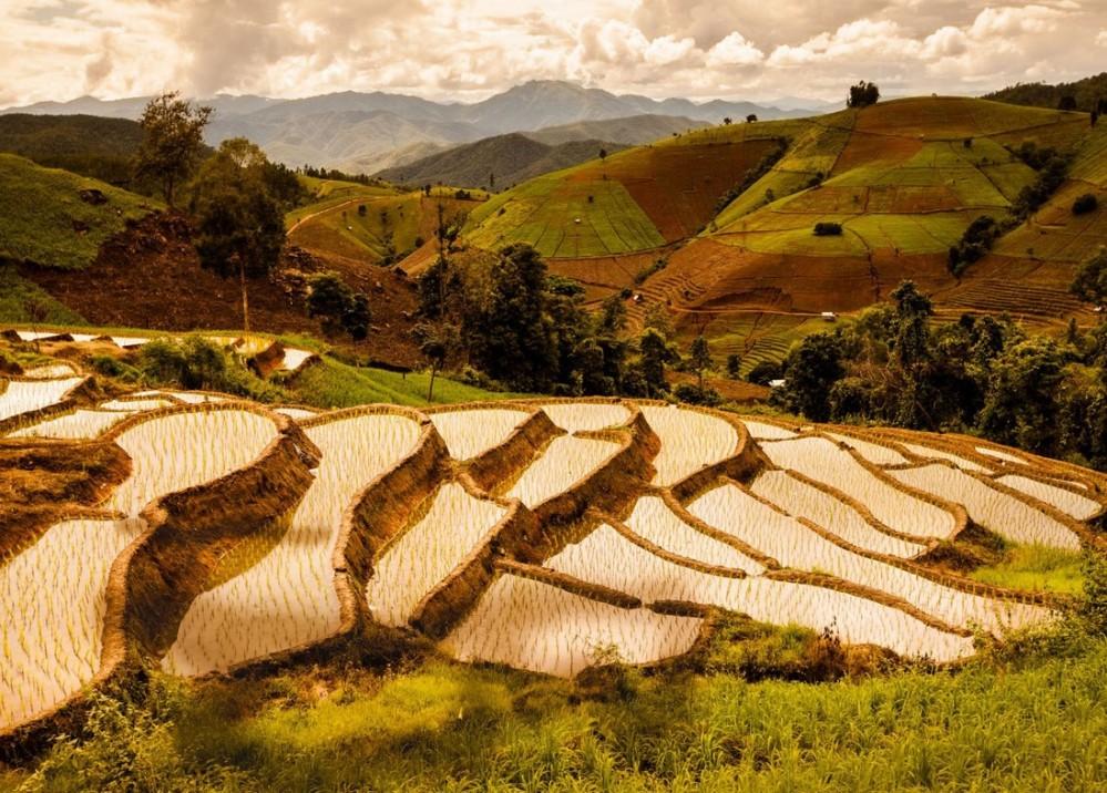 riziere Thailande2