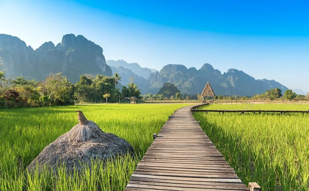 rizieres Laos3