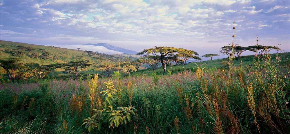 Umbrella Trees Masai Mara National Park @Horst Klemm (2)